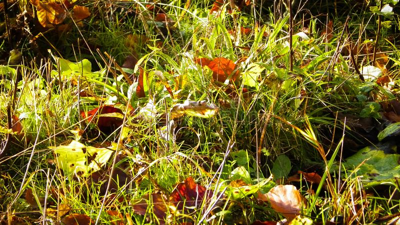 Autumnal forest bedding as nature background. Nature background stock photo