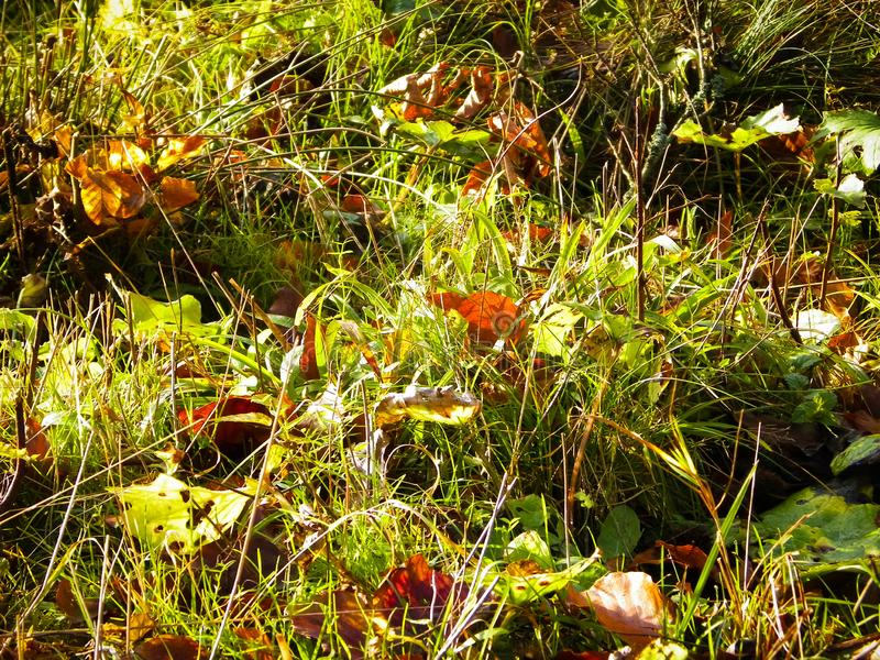 Autumnal forest bedding as nature background. Nature background stock image