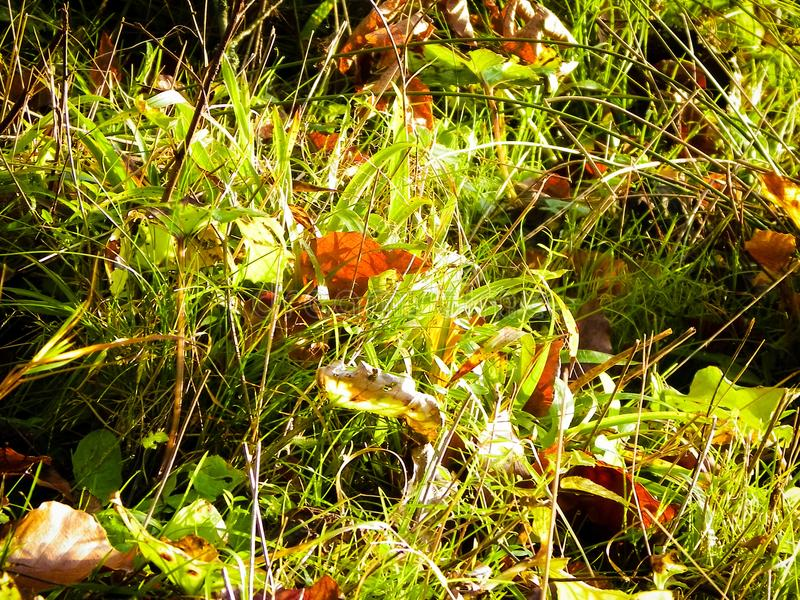 Autumnal forest bedding as nature background. Nature background royalty free stock photography