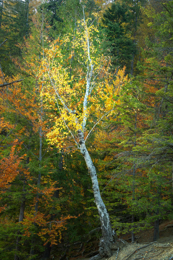 Download Autumnal Forest Environment Stock Image - Image: 29021493