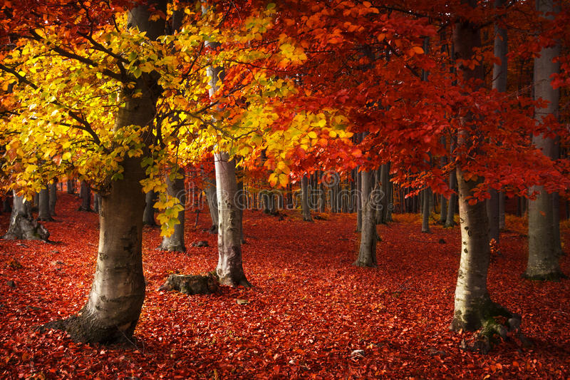 Autumnal forest environment stock images