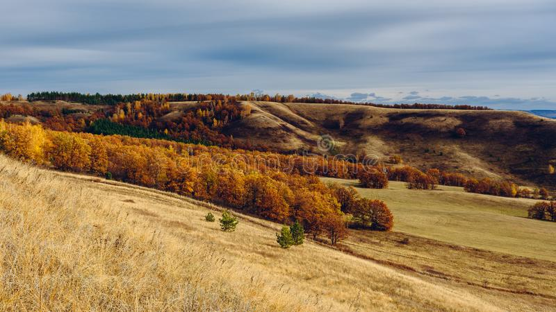 Autumnal forest on the hillside. At overcast day stock images
