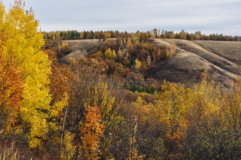 Autumnal forest on the hillside. At overcast day royalty free stock photo