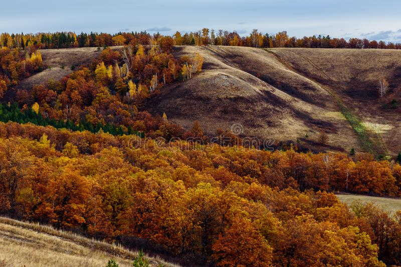 Autumnal forest on the hillside. At overcast day royalty free stock photos