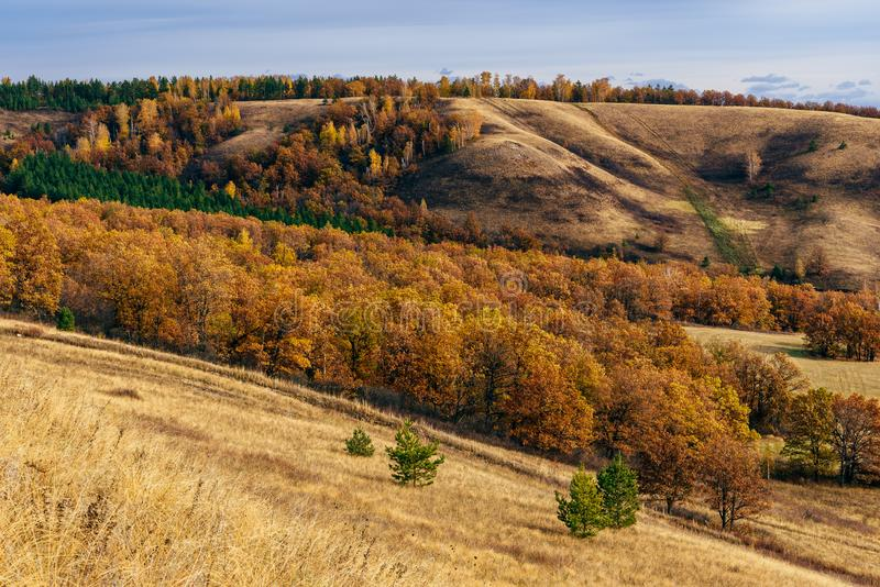 Autumnal forest on the hillside. At overcast day stock photography