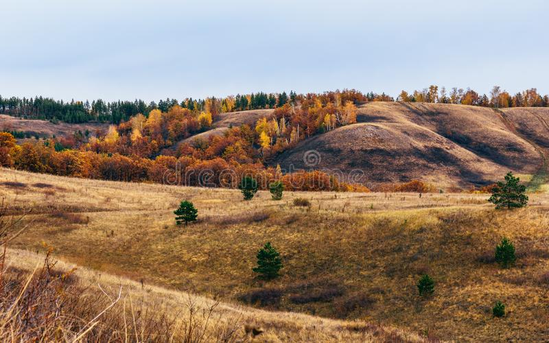 Autumnal forest on the hillside. At overcast day royalty free stock images