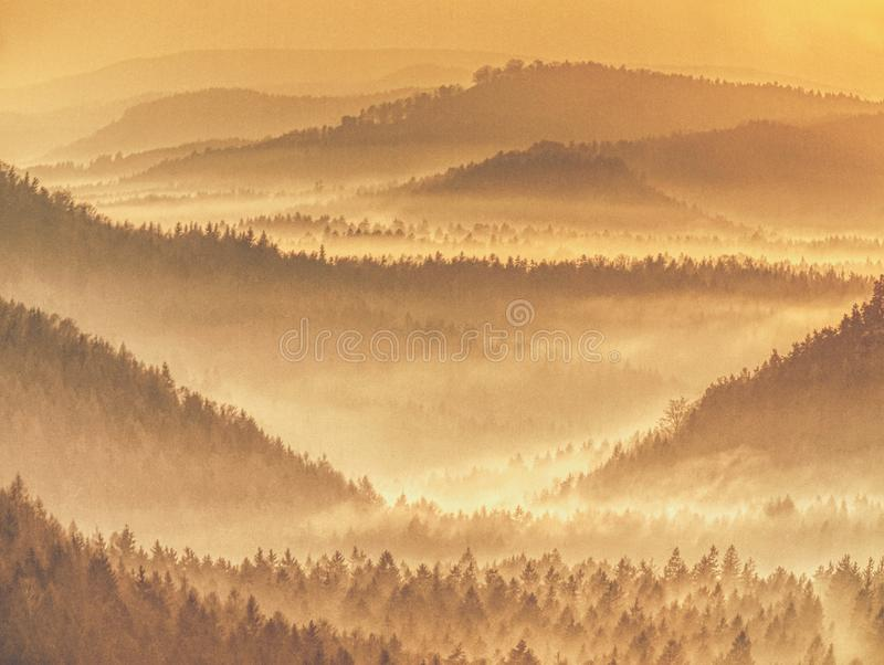Autumnal forest in misty shadows. Misty landscape. Autumnal forest in misty shadows. Misty mountain forest landscape. Foggy needles forest woods weather travel stock photos
