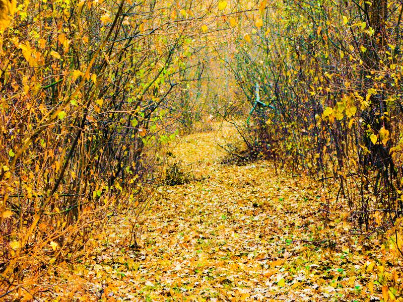 Autumnal forest road. Autumn cloudy day, autumnal deciduous forest and road covered with dry fallen leaves stock images