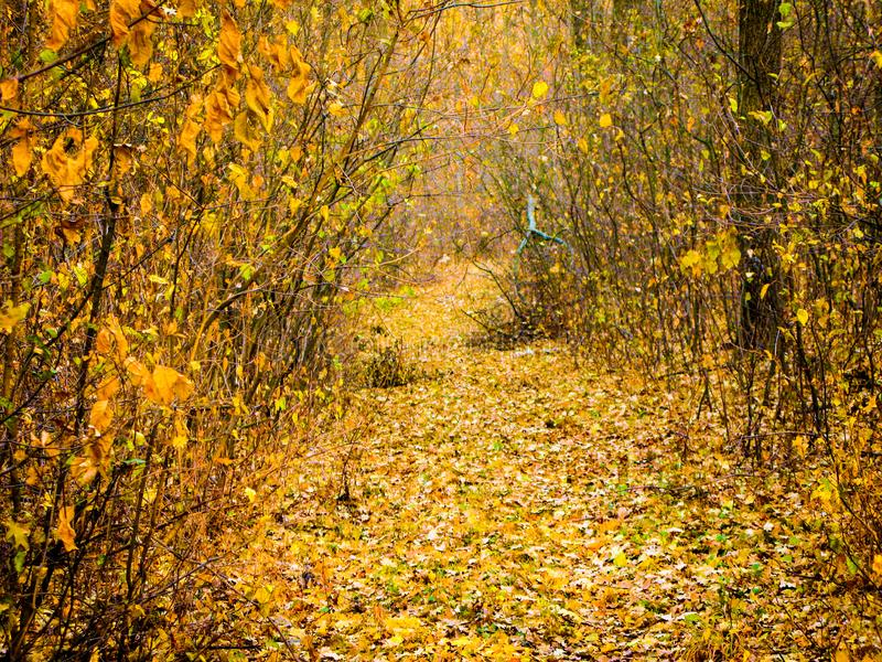 Autumnal forest road. Autumn cloudy day, autumnal deciduous forest and road covered with dry fallen leaves stock image