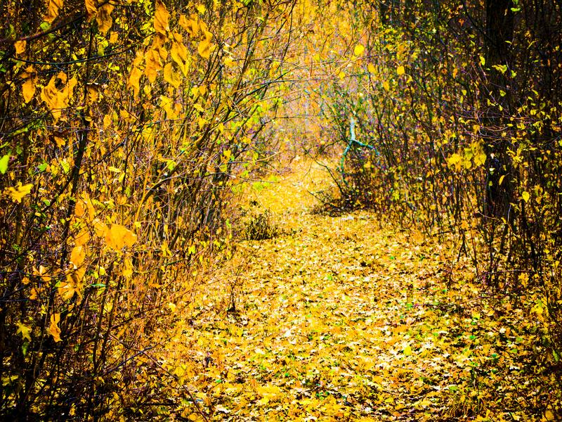 Autumnal forest road. Autumn cloudy day, autumnal deciduous forest and road covered with dry fallen leaves stock photo