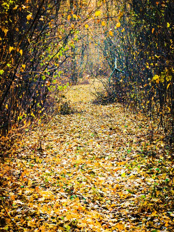 Autumnal forest road. Autumn cloudy day, autumnal deciduous forest and road covered with dry fallen leaves, vertical shot royalty free stock image