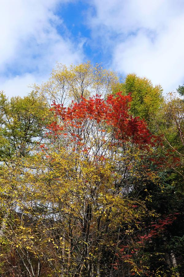 Autumnal forest. The scenery of autumnal forest under the sky stock image