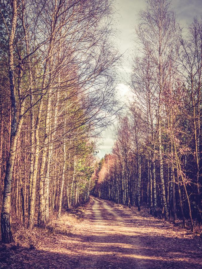 Autumnal forest in the sunshine stock photography