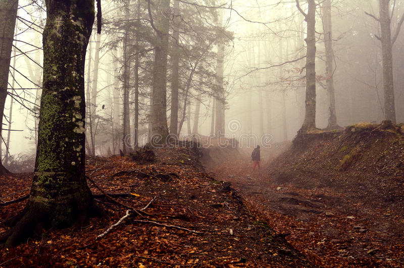Autumnal Forest Walk. Autumn autumnal forest road path and fog with a ghostly figure royalty free stock photography