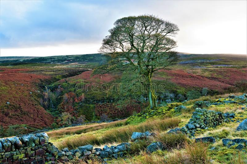 Autumnal heather hue; halloween time on High Withens, Haworth, West Yorkshire. royalty free stock image