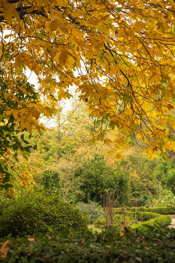 Autumnal landscape with green and yellow leaf trees in the botanical garden of Madrid. Spain, Europe stock photography