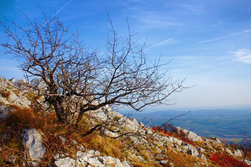 Autumnal landscape of a lonelly bare tree on a mountain top royalty free stock photo