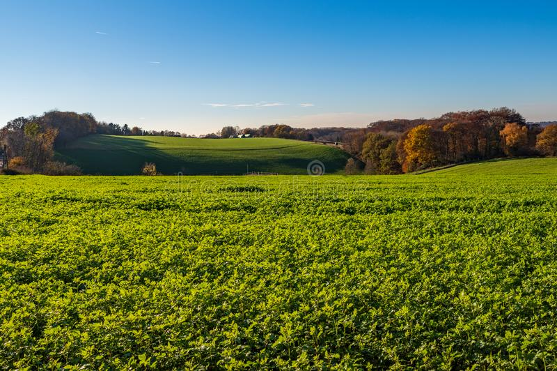 Autumnal landscape, view over meadows, fields and forest, Essen stock photo