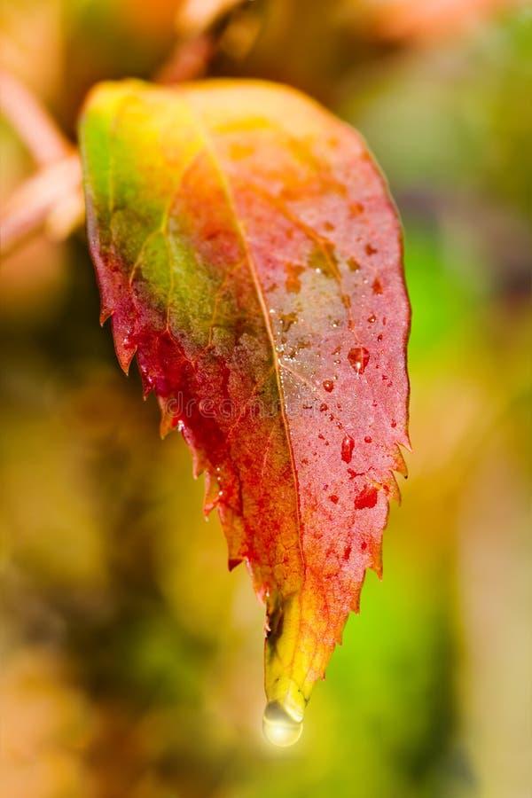 Download Autumnal Leaf Royalty Free Stock Image - Image: 3371136