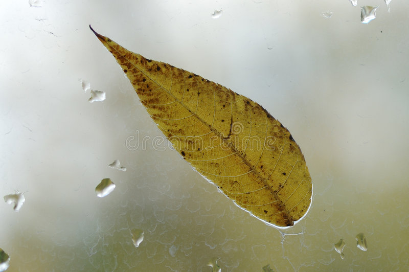 Autumnal leaf. stock photography