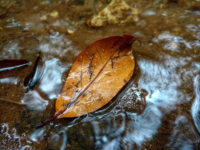 Autumnal leaf in river water circulating. Nature, photo in the morning stock photography