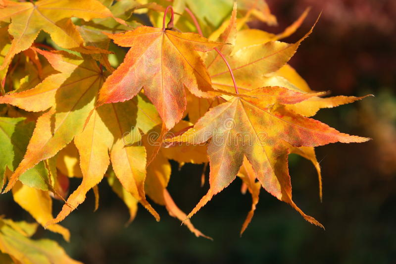 Download Autumnal leaves stock photo. Image of nature, fall, yellow - 11055360