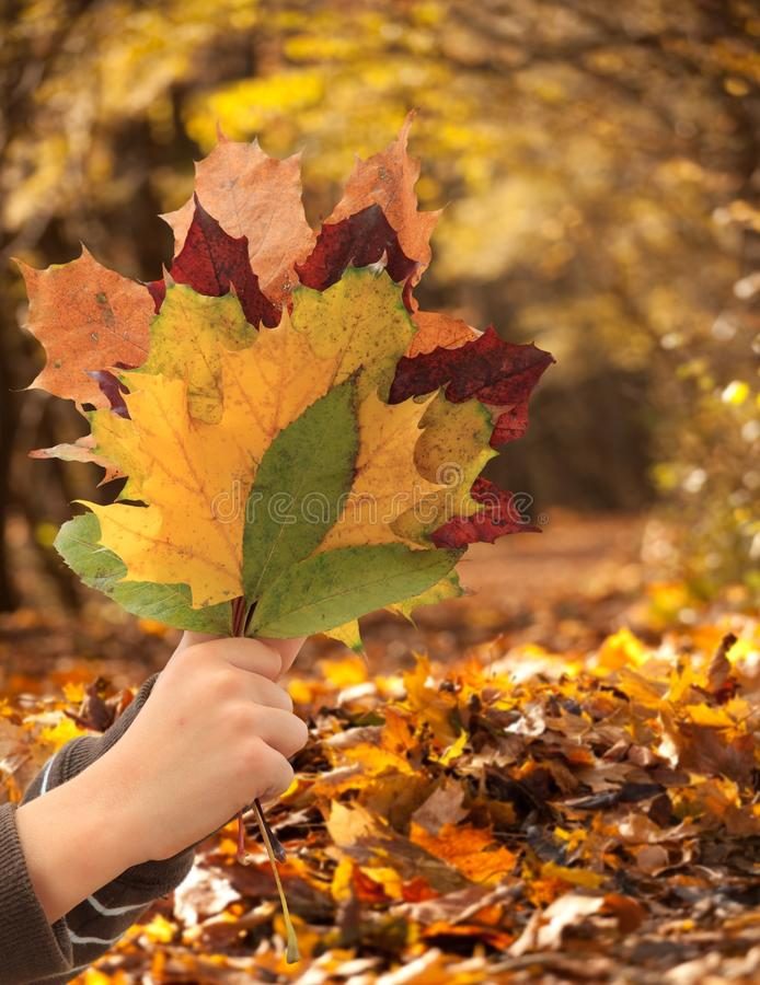 Download Autumnal Leaves Royalty Free Stock Photography - Image: 11822527