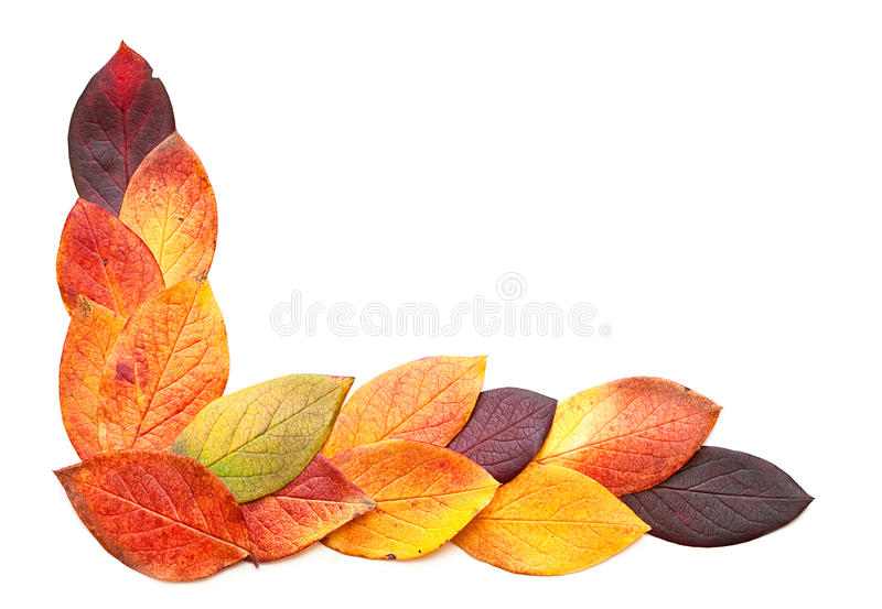 Download Autumnal leaves. stock photo. Image of pattern, white - 16433612