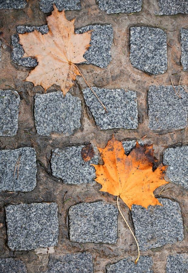 Download Autumnal leaves stock photo. Image of ground, rain, season - 21896570