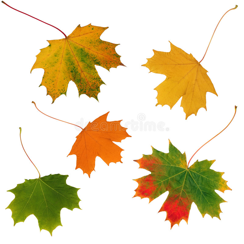 Download Autumnal Leaves Stock Photography - Image: 4413942