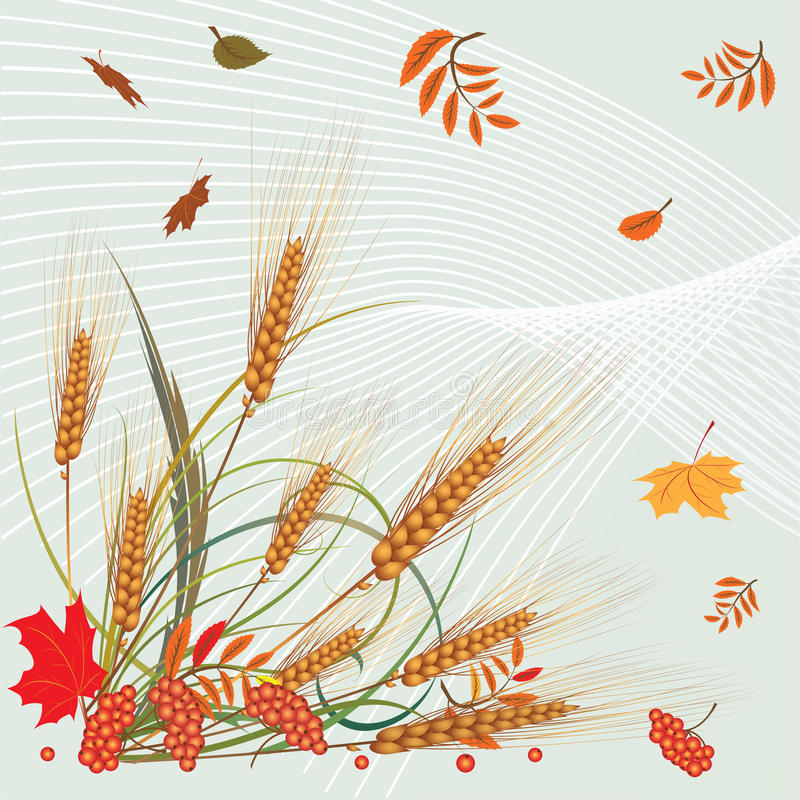 Download Autumnal leaves and ears stock vector. Image of agriculture - 15412712