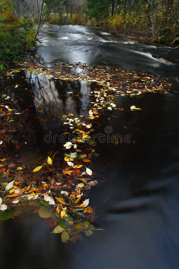 Autumnal leaves on river