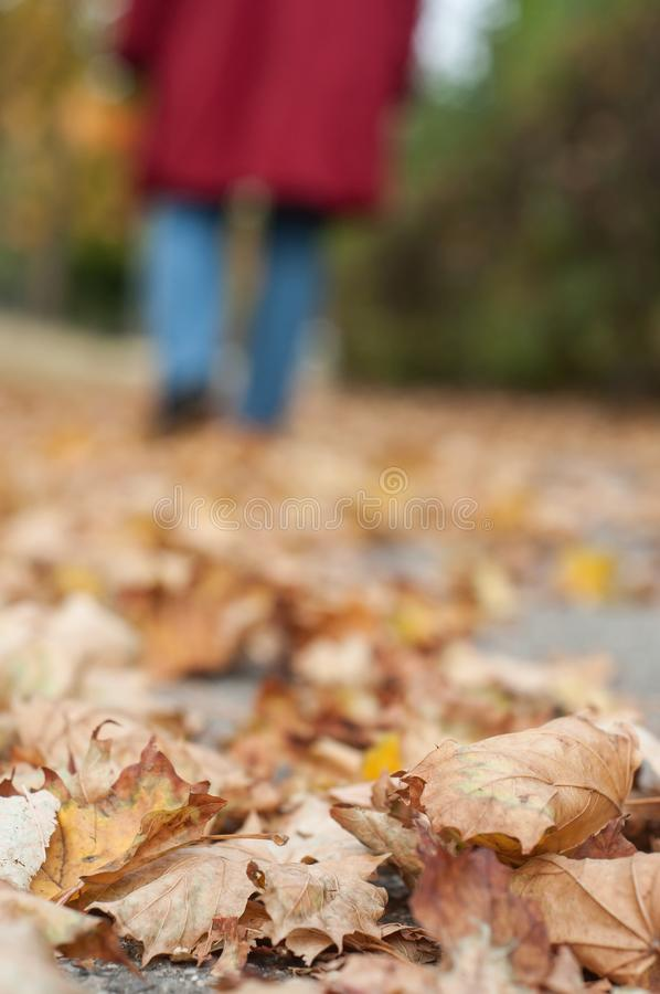 Autumnal leaves on the road with woman walking backgr. Closeup of autumnal leaves on the road with woman walking background stock photography