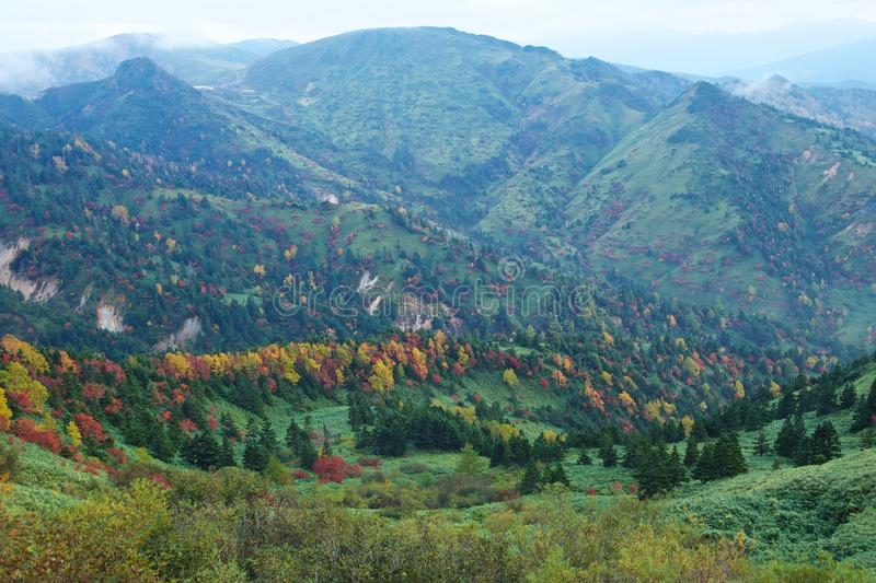 View of autumnal leaves of Shiga Kogen. stock image