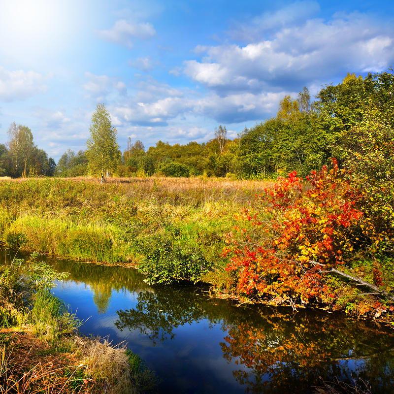 Autumnal nature, scenery. Forest and river royalty free stock photography