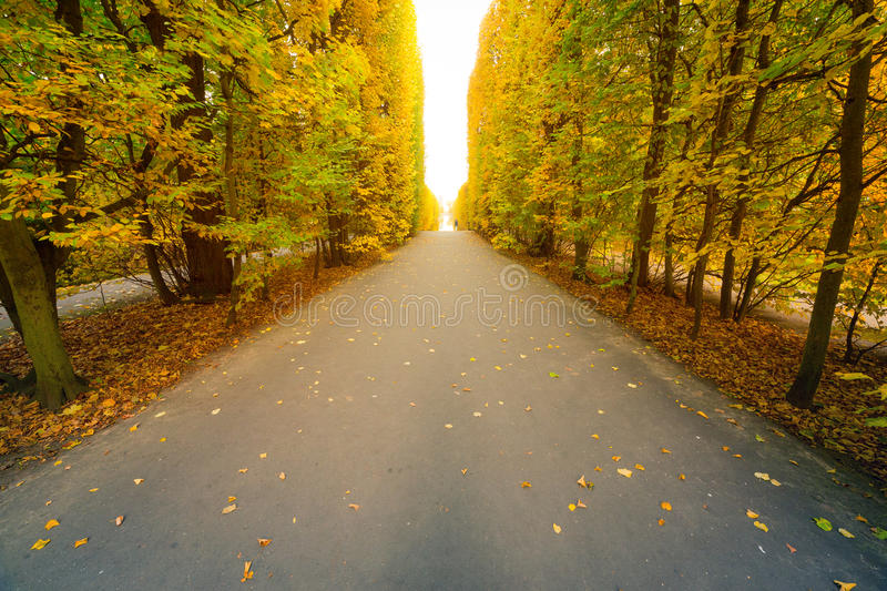 Download Autumnal park alley stock image. Image of beautiful, landscape - 34477187