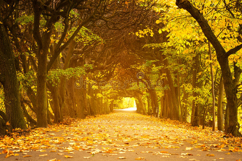 Download Autumnal park alley stock image. Image of beautiful, path - 34477301