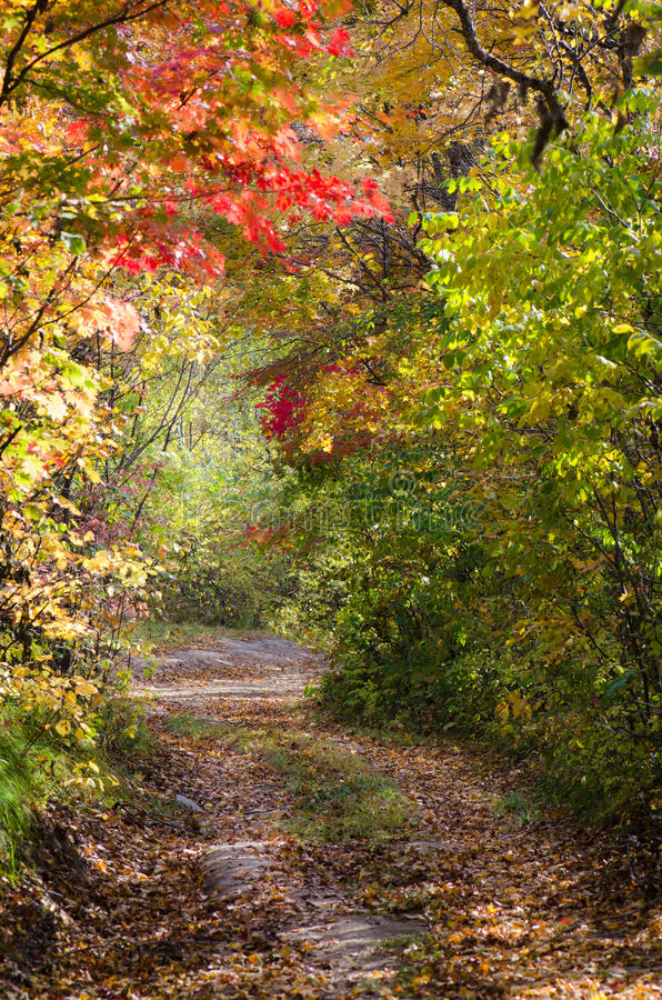 Autumnal park alley, colorful autumn. Autumnal alley, colorful autumn, park path through red maples stock photos