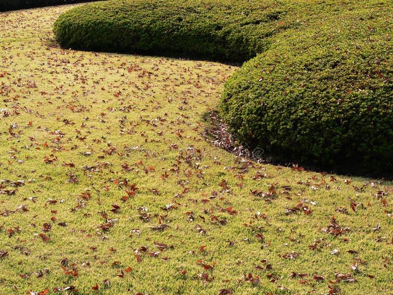 Autumnal park lane