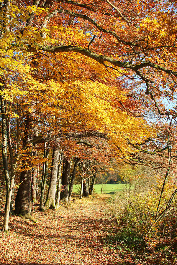 Autumnal pathway through colorful oak trees. At the woods border, bavarian landscape royalty free stock images