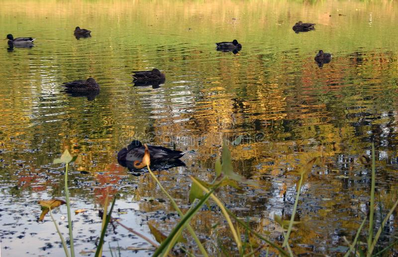 Autumnal Pond. Stock Images