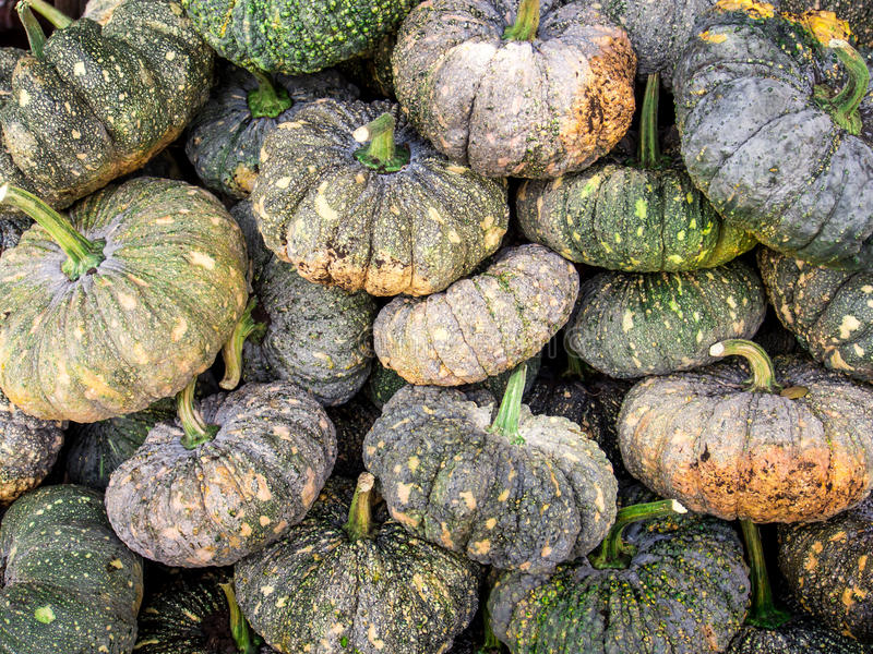 Autumnal pumpkins, harvest in Thailand royalty free stock photo