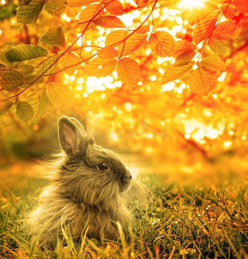Autumnal rabbit. Beautiful Art Design background royalty free stock image