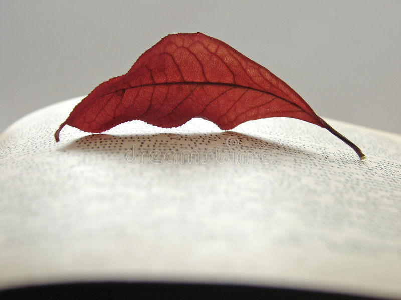 Autumnal reading 1 royalty free stock photos