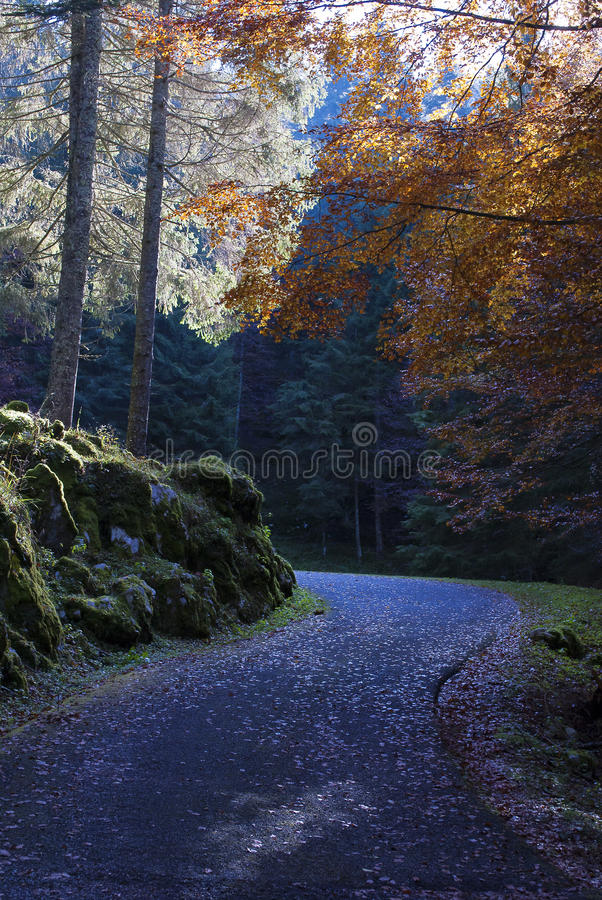 Download Autumnal road stock photo. Image of green, away, foggy - 21929624