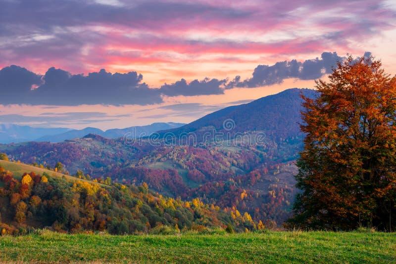autumnal rural landscape at dusk stock photos