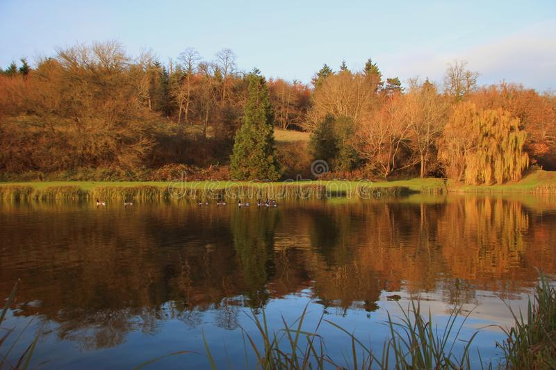 Autumnal tree water reflections in English lake. Autumn trees landscape with lovely water reflections in the late afternoon sun stock photography