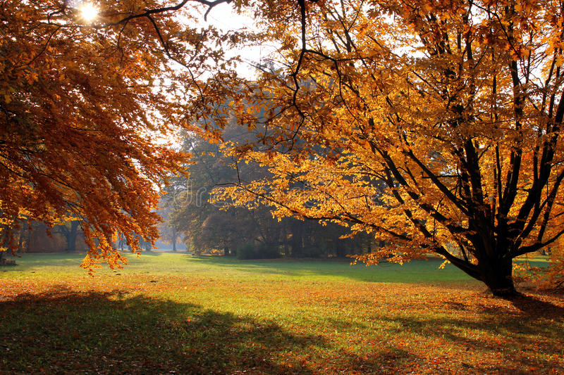Autumnal trees in park. Scenic view of colorful autumnal trees in picturesque park stock photo