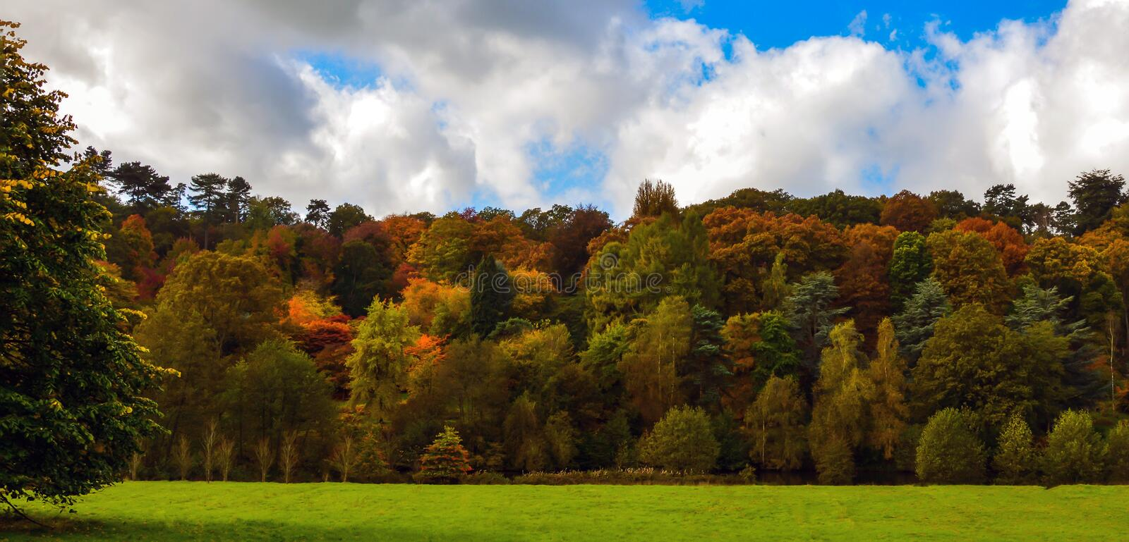 Autumnal trees. A picture of a beautiful autumnal forest in England royalty free stock image
