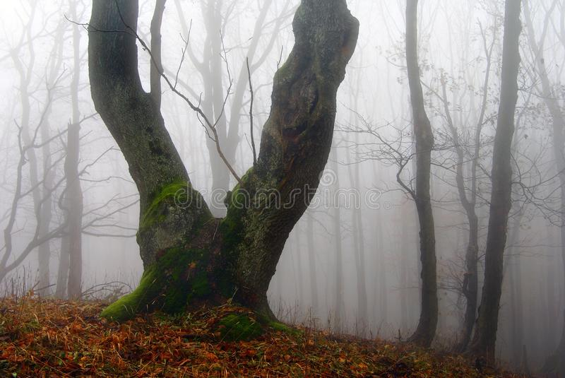Download Autumnal View Of Deciduous Wood Stock Image - Image: 22880901